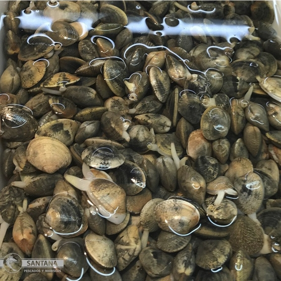 comprar-almeja-fina-huelva-gourmet-pescaderia-online-sabor-huelva