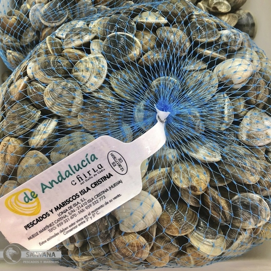 comprar-chirla-del-golfo-de-cadiz-pescaderia-online